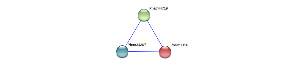 Phatr11116 protein (Phaeodactylum tricornutum) - STRING interaction network