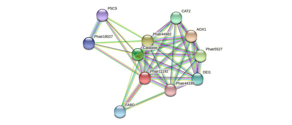 Phatr11192 protein (Phaeodactylum tricornutum) - STRING interaction network