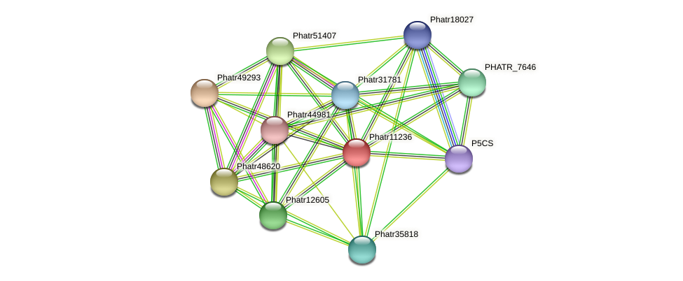 Phatr11236 protein (Phaeodactylum tricornutum) - STRING interaction network