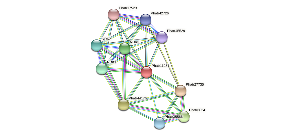 Phatr11281 protein (Phaeodactylum tricornutum) - STRING interaction network