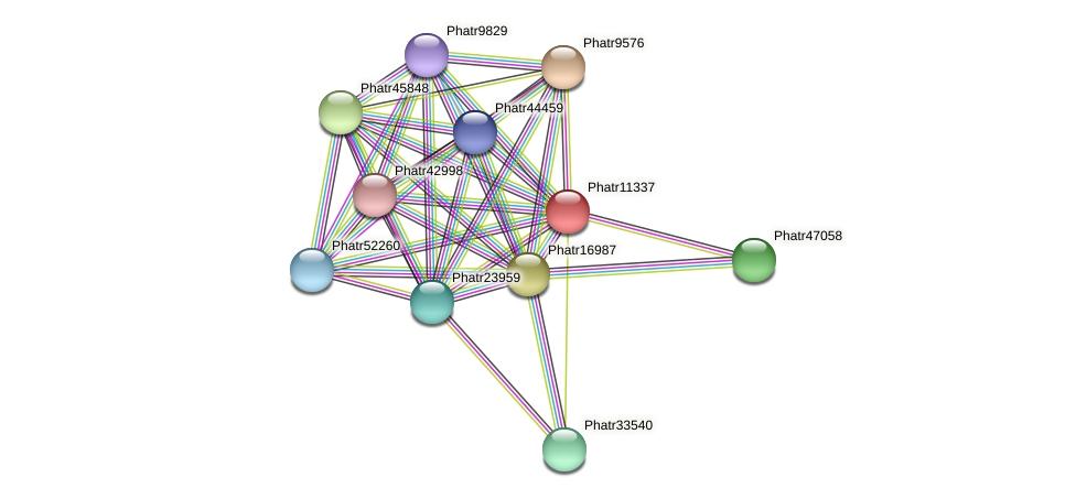 Phatr11337 protein (Phaeodactylum tricornutum) - STRING interaction network