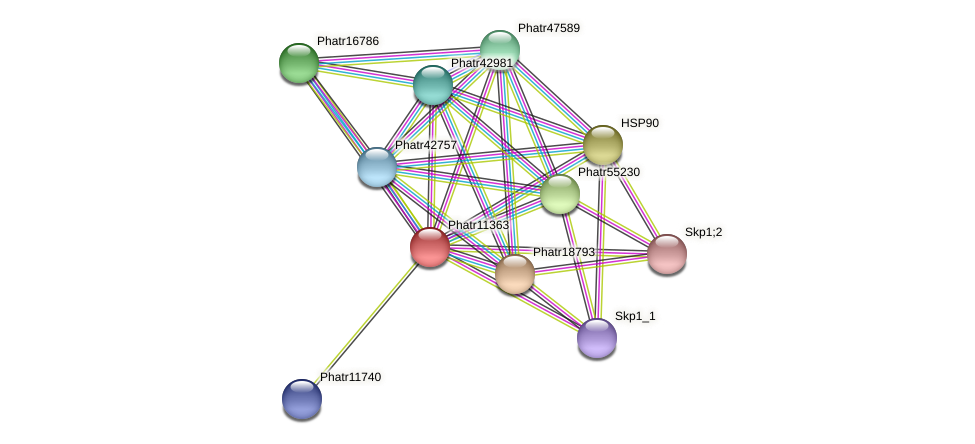 Phatr11363 protein (Phaeodactylum tricornutum) - STRING interaction network