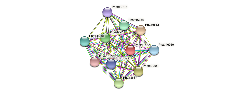 Phatr11462 protein (Phaeodactylum tricornutum) - STRING interaction network