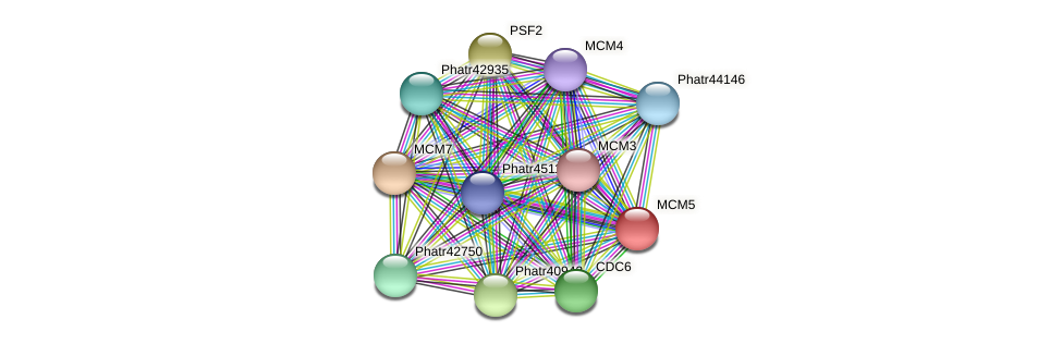 MCM5 protein (Phaeodactylum tricornutum) - STRING interaction network