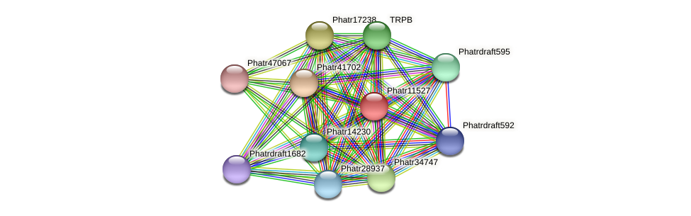 Phatr11527 protein (Phaeodactylum tricornutum) - STRING interaction network