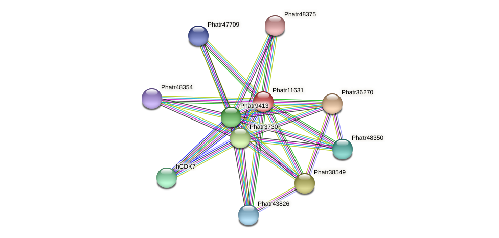 Phatr11631 protein (Phaeodactylum tricornutum) - STRING interaction network