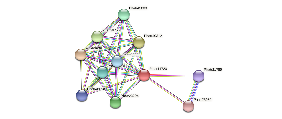 Phatr11720 protein (Phaeodactylum tricornutum) - STRING interaction network