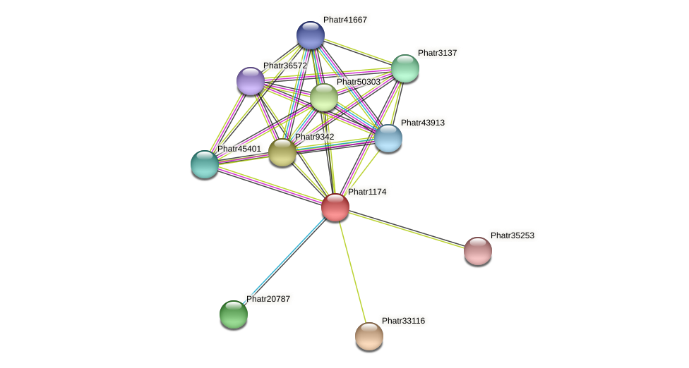 Phatr1174 protein (Phaeodactylum tricornutum) - STRING interaction network