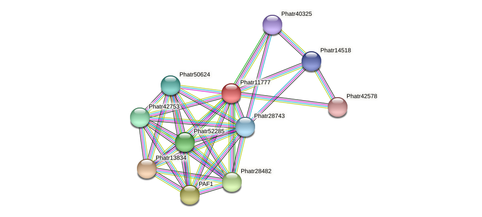 Phatr11777 protein (Phaeodactylum tricornutum) - STRING interaction network