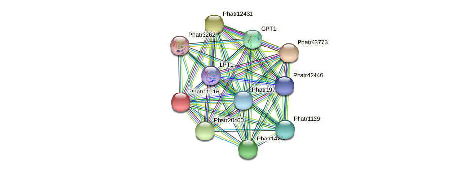 Phatr11916 protein (Phaeodactylum tricornutum) - STRING interaction network