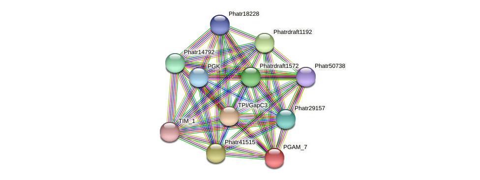 PGAM_7 protein (Phaeodactylum tricornutum) - STRING interaction network