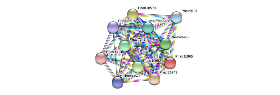Phatr11965 protein (Phaeodactylum tricornutum) - STRING interaction network
