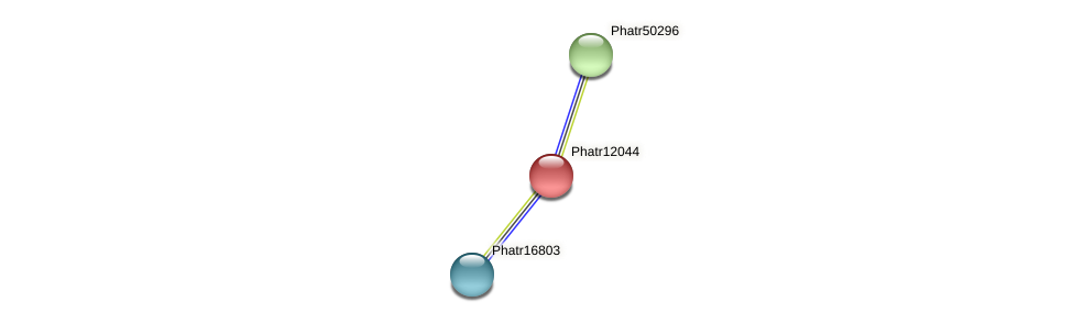 Phatr12044 protein (Phaeodactylum tricornutum) - STRING interaction network