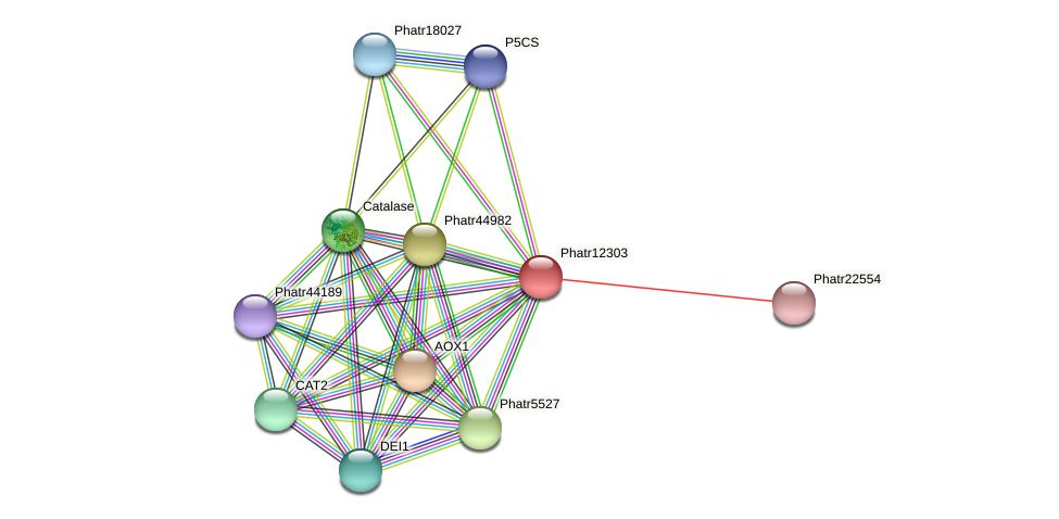 Phatr12303 protein (Phaeodactylum tricornutum) - STRING interaction network