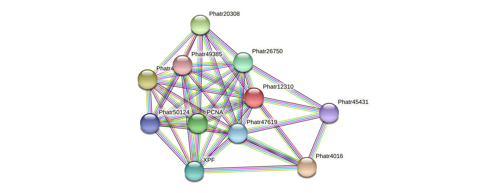 Phatr12310 protein (Phaeodactylum tricornutum) - STRING interaction network
