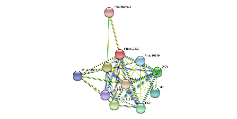 Phatr12330 protein (Phaeodactylum tricornutum) - STRING interaction network