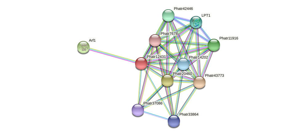 Phatr12431 protein (Phaeodactylum tricornutum) - STRING interaction network