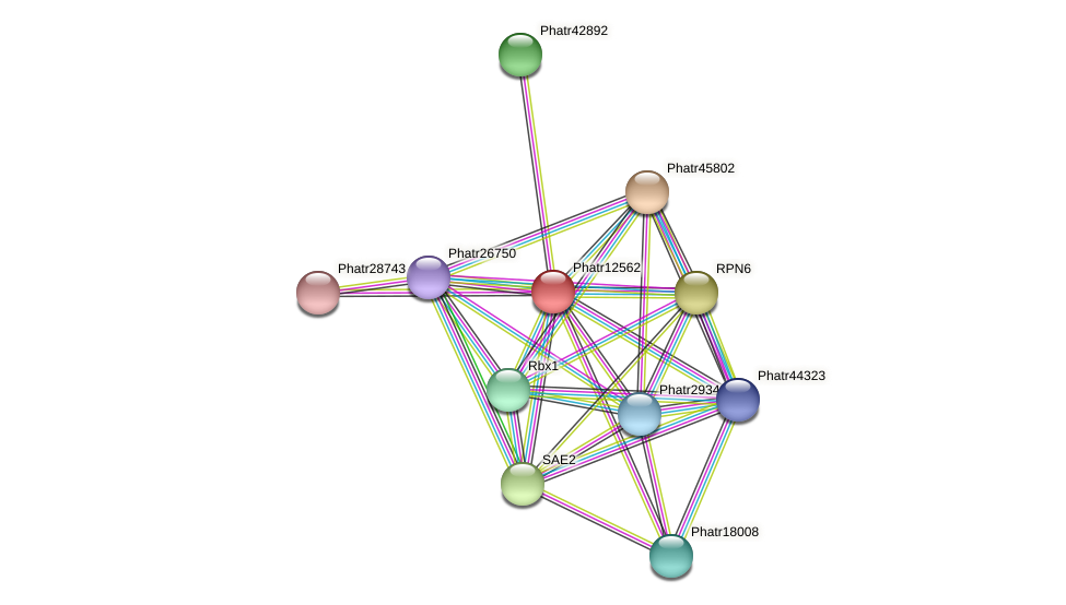Phatr12562 protein (Phaeodactylum tricornutum) - STRING interaction network