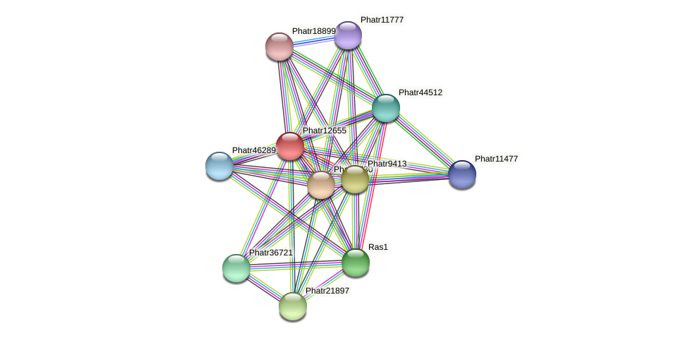 Phatr12655 protein (Phaeodactylum tricornutum) - STRING interaction network