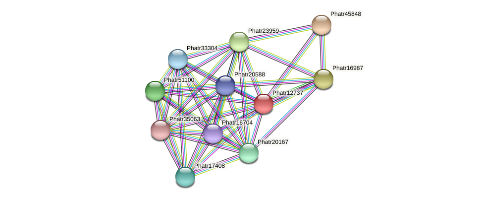 Phatr12737 protein (Phaeodactylum tricornutum) - STRING interaction network
