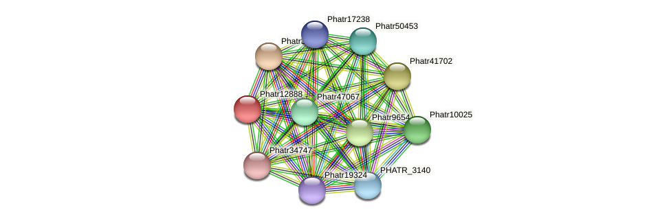 Phatr12888 protein (Phaeodactylum tricornutum) - STRING interaction network