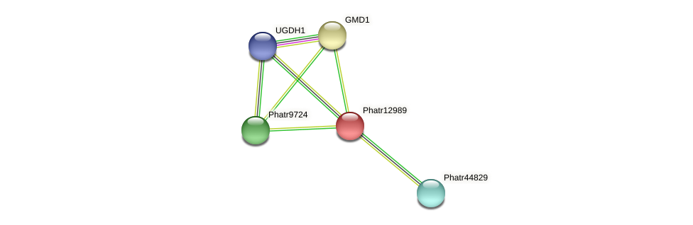 Phatr12989 protein (Phaeodactylum tricornutum) - STRING interaction network