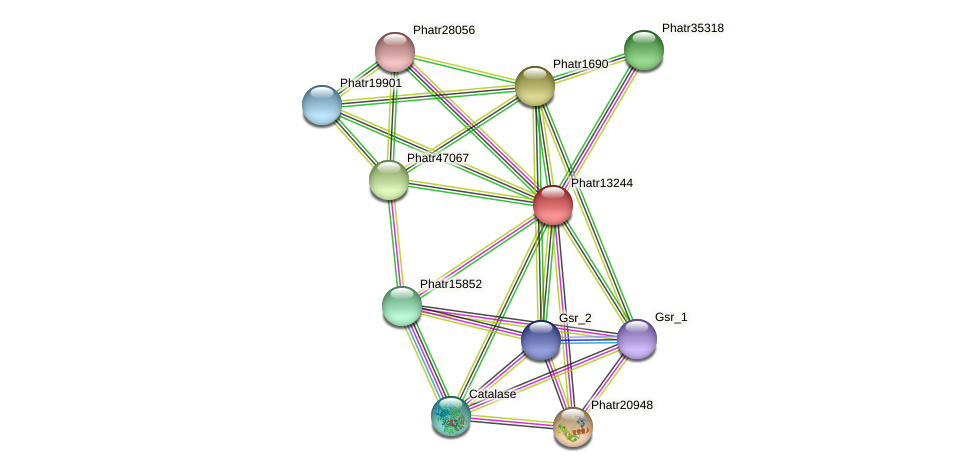 Phatr13244 protein (Phaeodactylum tricornutum) - STRING interaction network