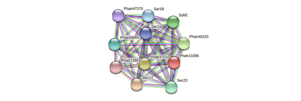 Phatr13396 protein (Phaeodactylum tricornutum) - STRING interaction network