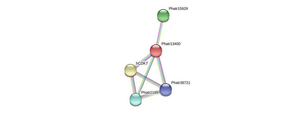 Phatr13400 protein (Phaeodactylum tricornutum) - STRING interaction network