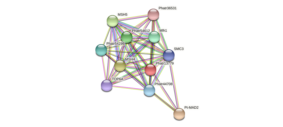 Phatr13779 protein (Phaeodactylum tricornutum) - STRING interaction network