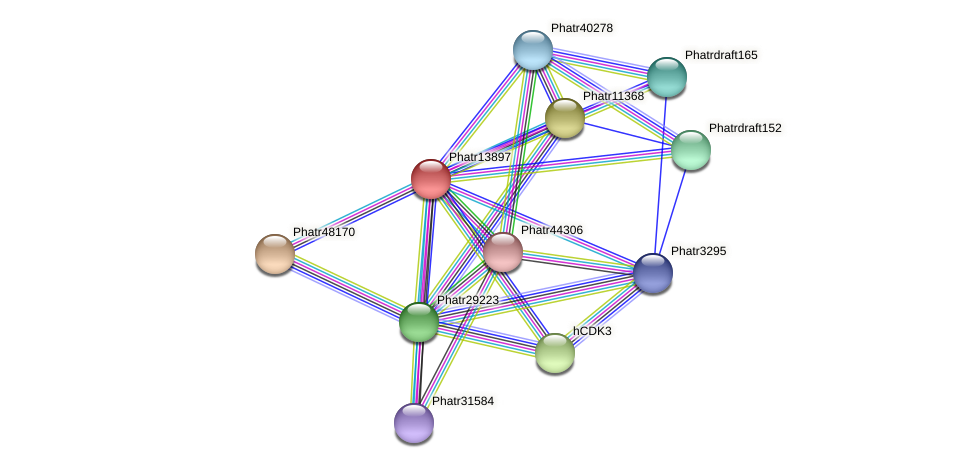 Phatr13897 protein (Phaeodactylum tricornutum) - STRING interaction network