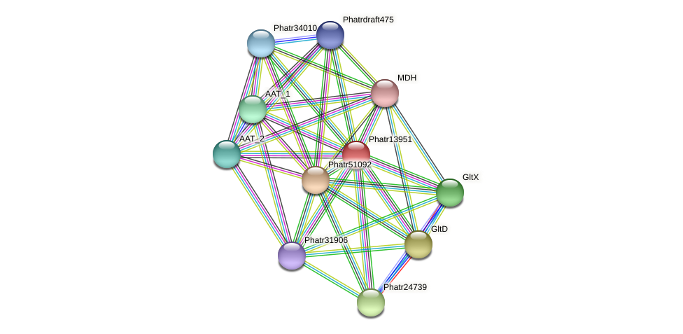 Phatr13951 protein (Phaeodactylum tricornutum) - STRING interaction network