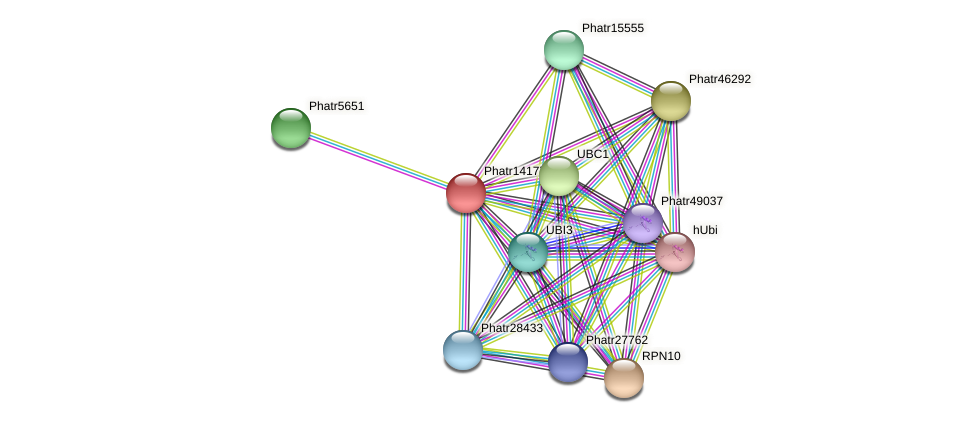 Phatr14177 protein (Phaeodactylum tricornutum) - STRING interaction network