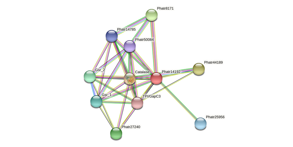 Phatr14192 protein (Phaeodactylum tricornutum) - STRING interaction network