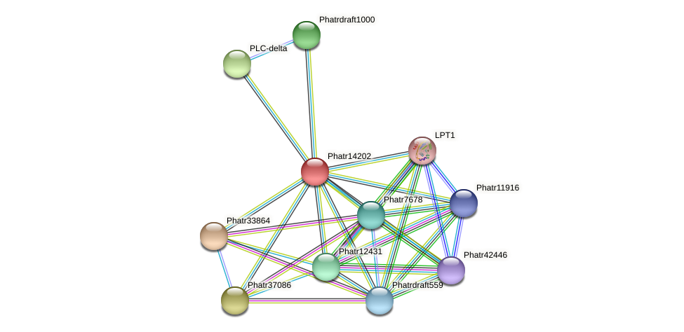Phatr14202 protein (Phaeodactylum tricornutum) - STRING interaction network
