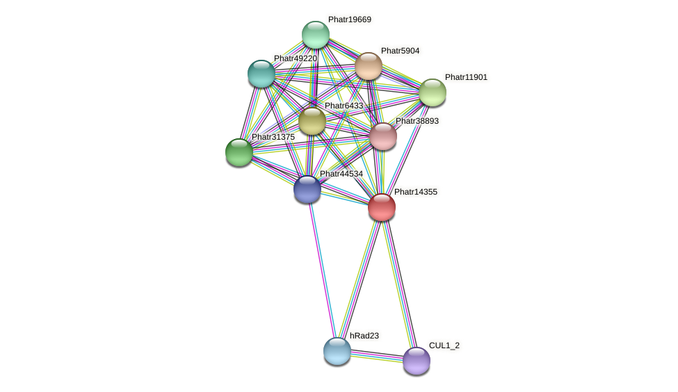 Phatr14355 protein (Phaeodactylum tricornutum) - STRING interaction network