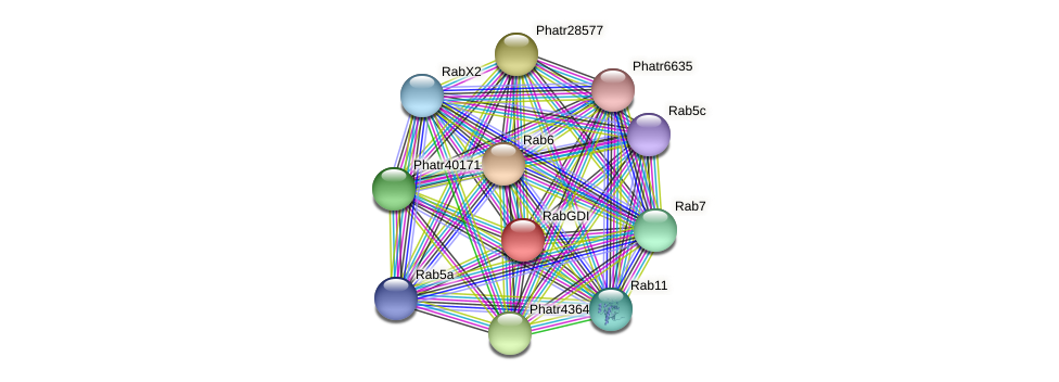RabGDI protein (Phaeodactylum tricornutum) - STRING interaction network