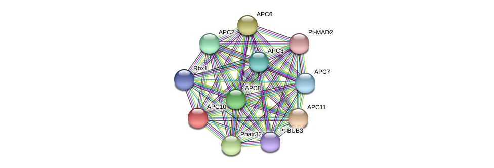 APC10 protein (Phaeodactylum tricornutum) - STRING interaction network
