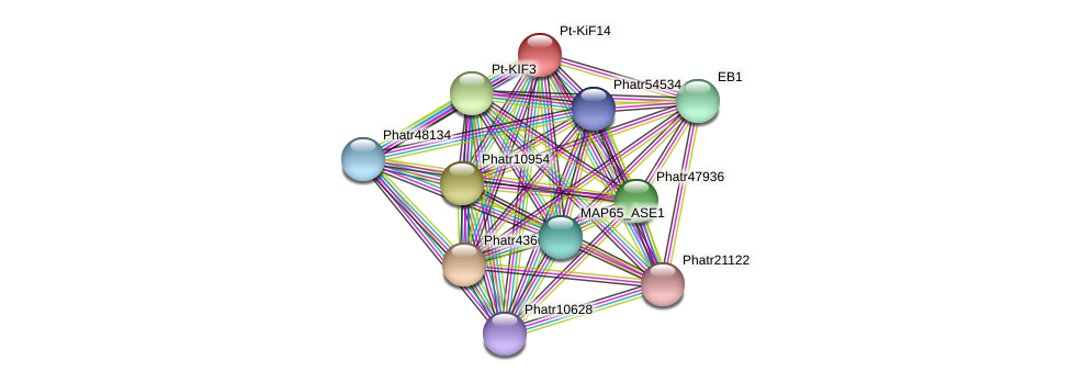 Pt-KiF14 protein (Phaeodactylum tricornutum) - STRING interaction network