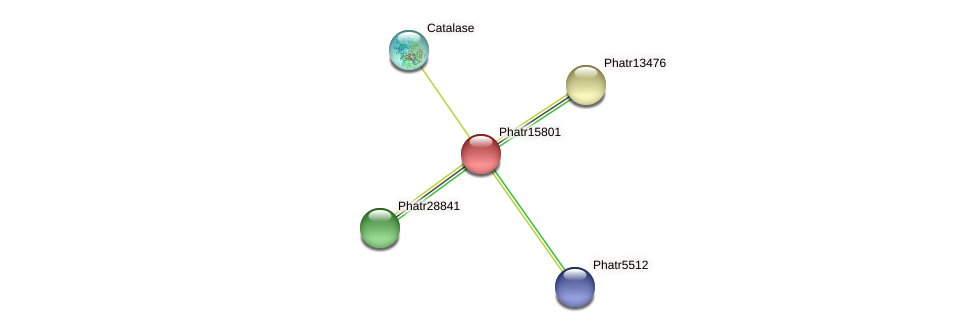 Phatr15801 protein (Phaeodactylum tricornutum) - STRING interaction network