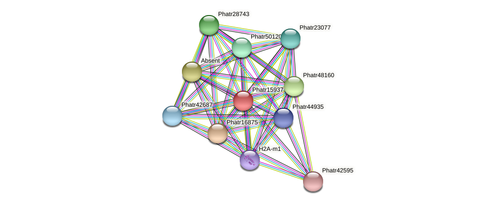 Phatr15937 protein (Phaeodactylum tricornutum) - STRING interaction network