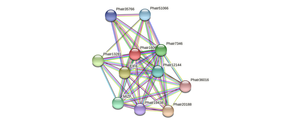 Phatr16065 protein (Phaeodactylum tricornutum) - STRING interaction network