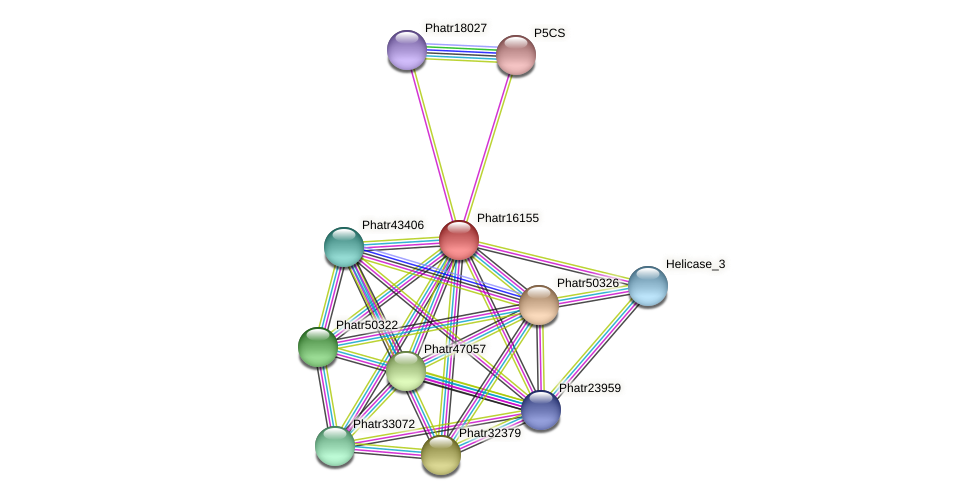 Phatr16155 protein (Phaeodactylum tricornutum) - STRING interaction network