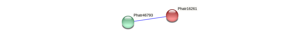 Phatr16261 protein (Phaeodactylum tricornutum) - STRING interaction network