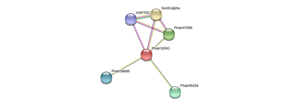 Phatr16341 protein (Phaeodactylum tricornutum) - STRING interaction network
