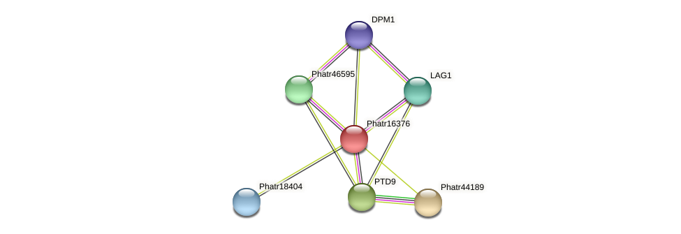 Phatr16376 protein (Phaeodactylum tricornutum) - STRING interaction network
