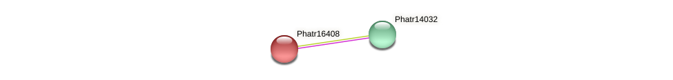 Phatr16408 protein (Phaeodactylum tricornutum) - STRING interaction network