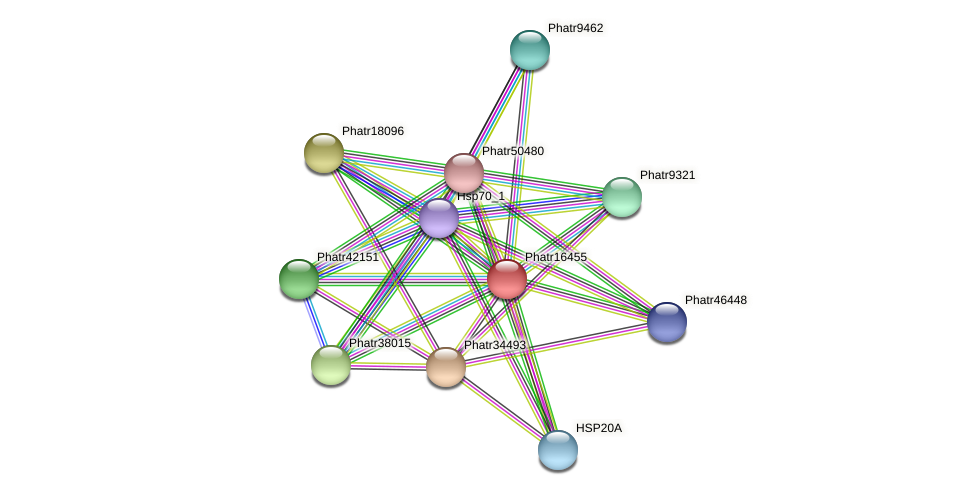 Phatr16455 protein (Phaeodactylum tricornutum) - STRING interaction network
