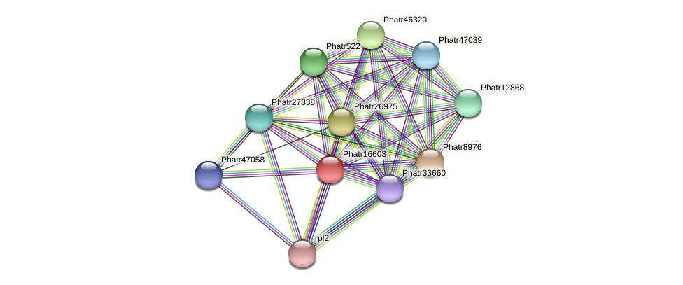 Phatr16603 protein (Phaeodactylum tricornutum) - STRING interaction network