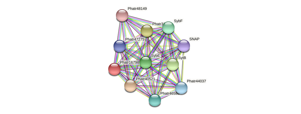 Phatr16798 protein (Phaeodactylum tricornutum) - STRING interaction network